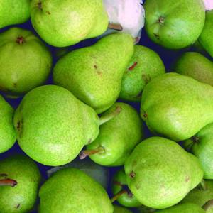 Pears: Williams, Red bartlett, D'anjou, Packhams, Abbate fetel