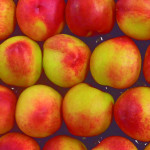 Peaches: White, Yellow, Nectarines